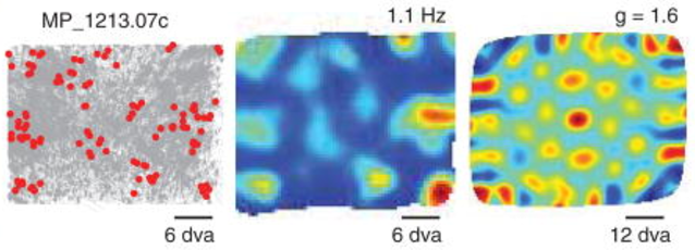 ICLR2018抢先看!RNN在空间定位训练中呈现的网格状表征:海马体的内嗅皮质与RNN一致表征